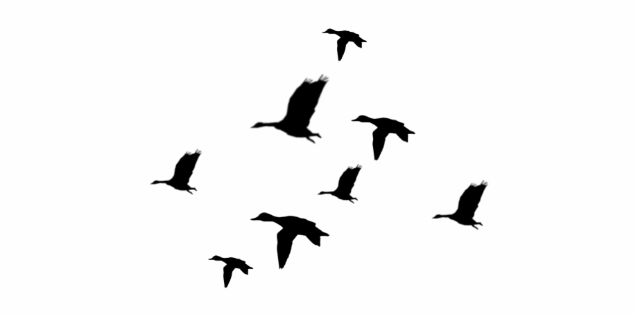 Duck Silhouette Png Ducks Flying Silhouette