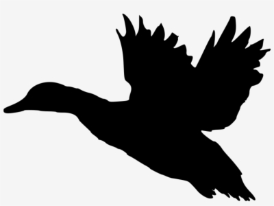 Duck Silhouette Png